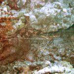 035 Lobster