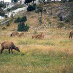 095 Yellowstone 12