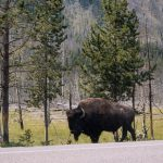 095 Yellowstone 29