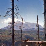 158 Mount St Helens 09