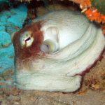 20050225-Octopus 01