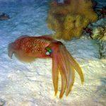 Calamaris 02