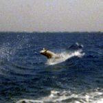 Dolfijnen 02