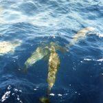 Dolfijnen 05