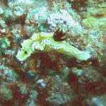 Nudibranch 02
